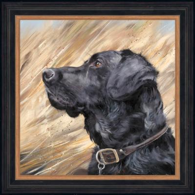 Debbie Boon Black Labrador in Reeds framed