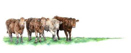 COWS SMALLEST FILE